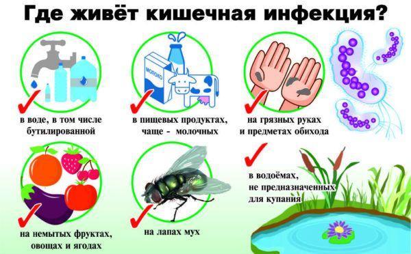 Где живет кишечная инфекция