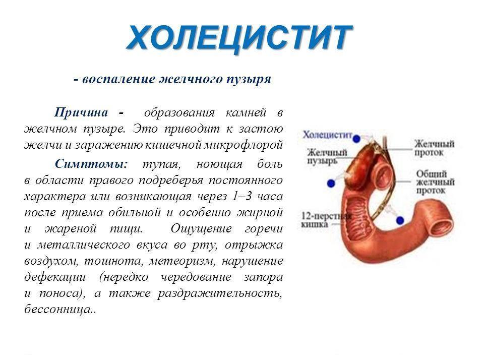 Симптомы и лечение желчного пузыря в домашних  806