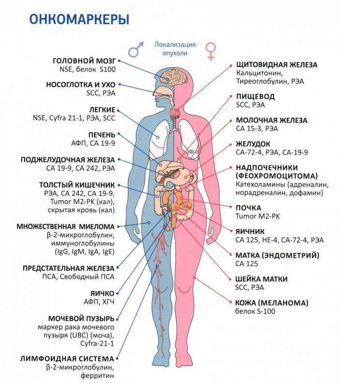 Онкомаркеры при меланоме кожи инвитро