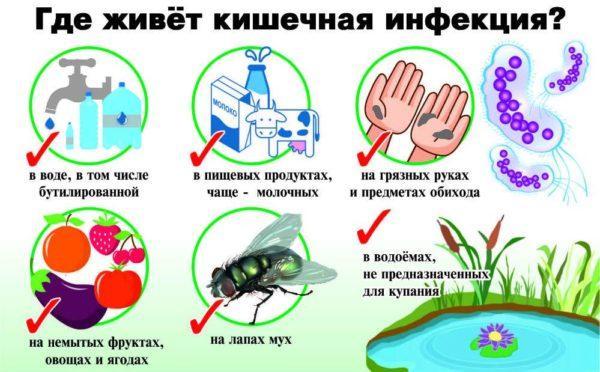 Распространители кишечных инфекций