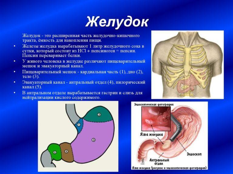 Признаки пониженной кислотности желудка: типичные и специфические симптомы, лечение