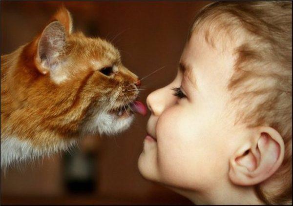 Лямблии легко передаются при контакте с домашними животными