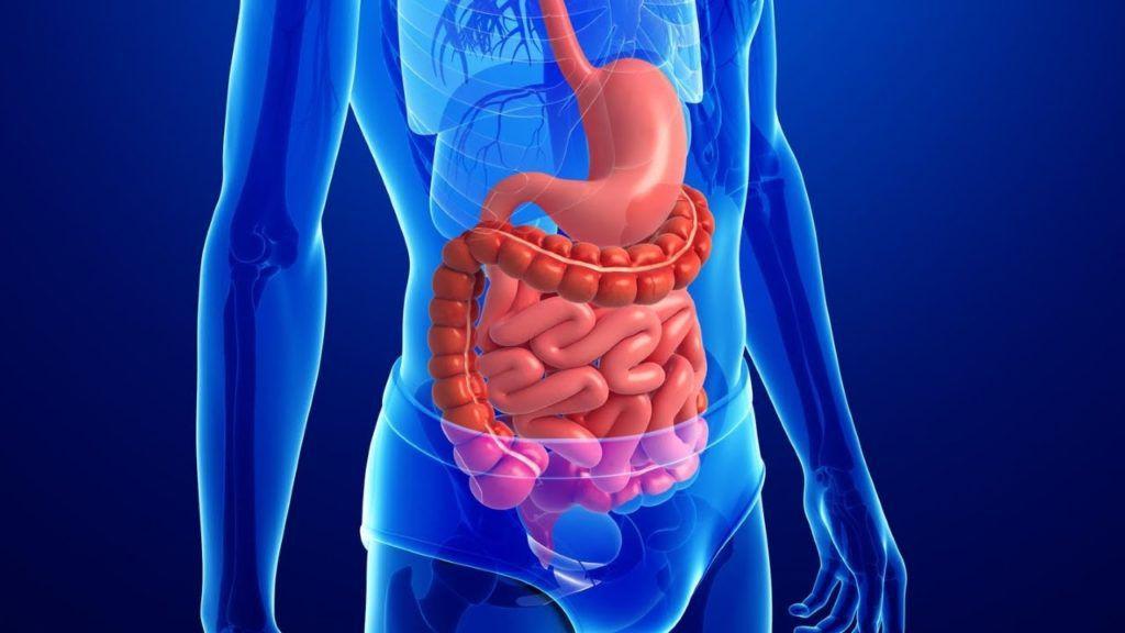 Если произошло опущение кишечника, то в дальнейшем произойдет смещение всех органов пищеварения