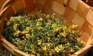 1. Сбор из герани, полыни, семян укропа, зверобоя