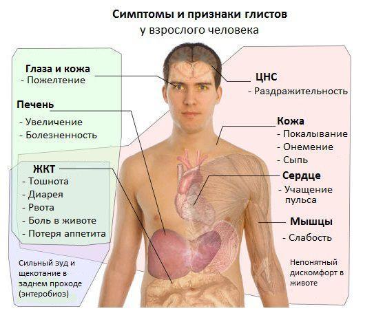 Симптомы гельминтоза у взрослого человека