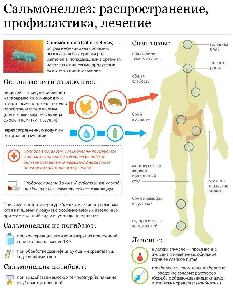 Симптомы и лечение сальмонеллеза