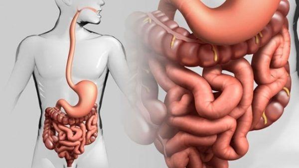 Болезни кишечника зачастую сопровождаются спазмами