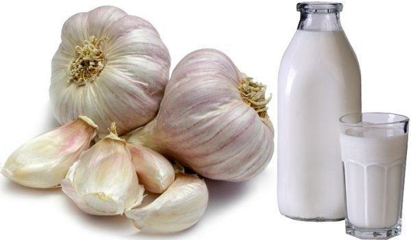 Чеснок с молоком — мягкое и эффективное средство от паразитов