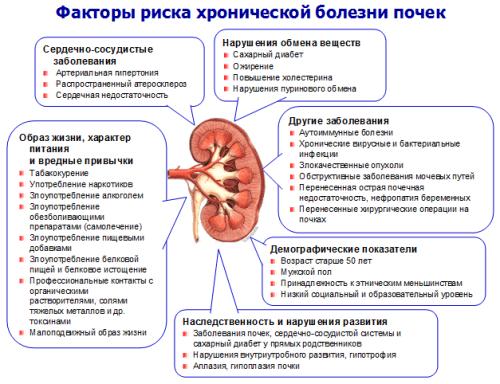 Факторы развития хронической болезни почек