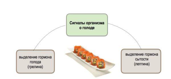 Физиология аппетита