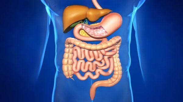 Как наладить пищеварение и работу кишечника