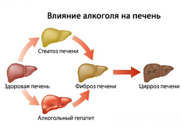 Как влияет алкоголь на печень
