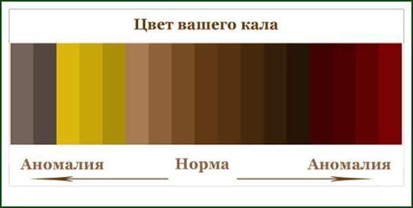 Норма и аномалия цвета кала