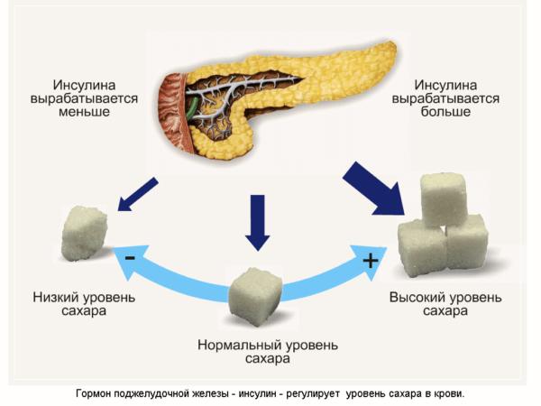 Поджелудочная железа отвечает за выработку гормона инсулина