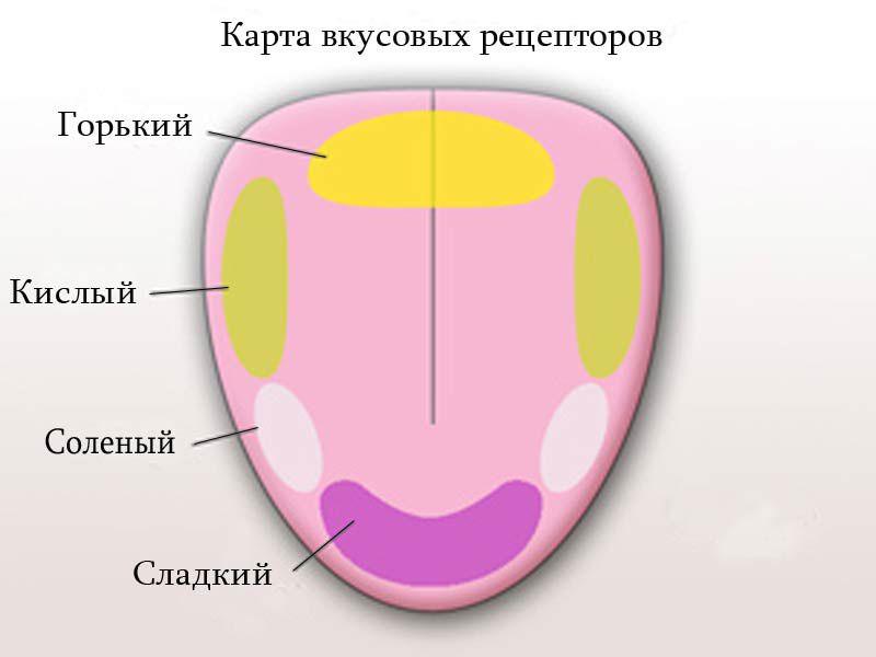 Распределение вкусовых зон на языке