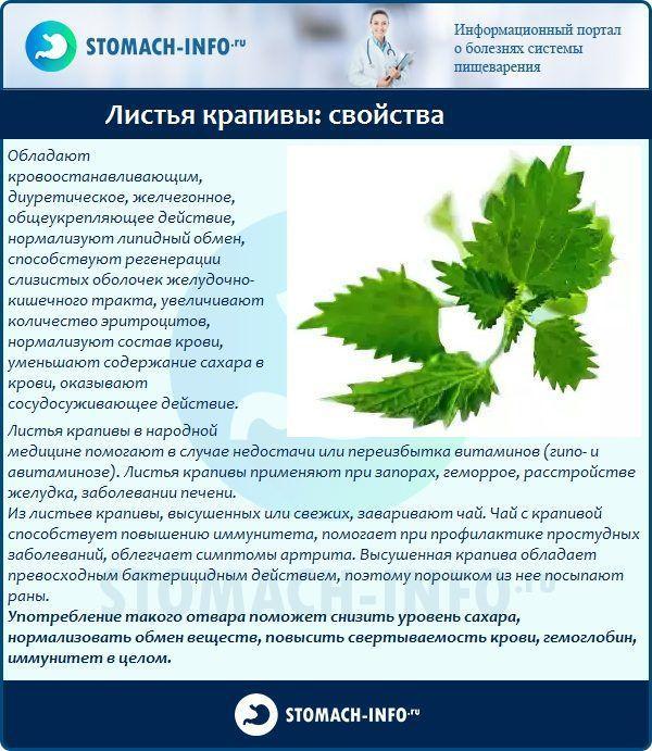 Листья крапивы: свойства