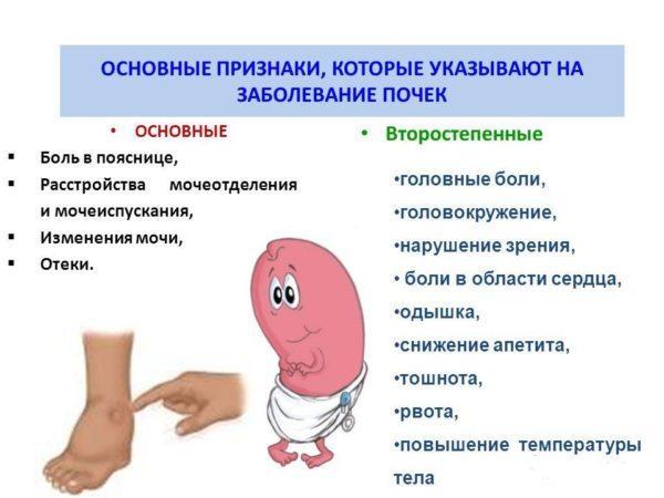 Признаки заболевания почек у мужчин - возможные болезни и их ...