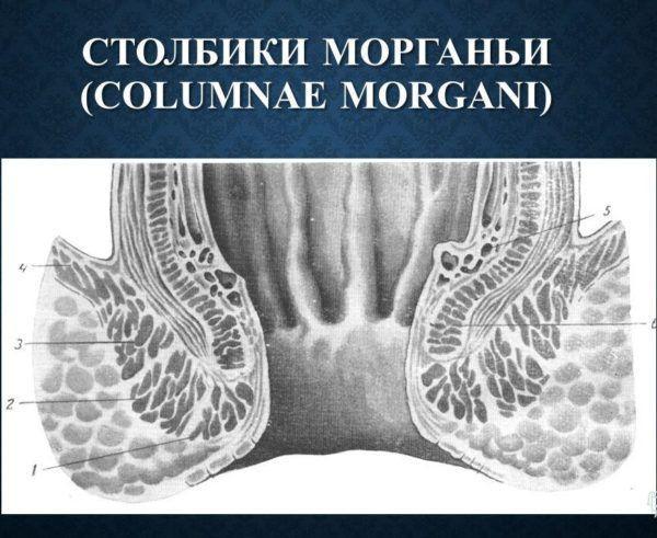 Столбики Морганьи