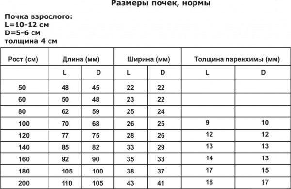 Таблица размеров почек
