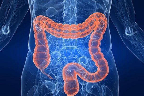 Толстый кишечник: строение и функции