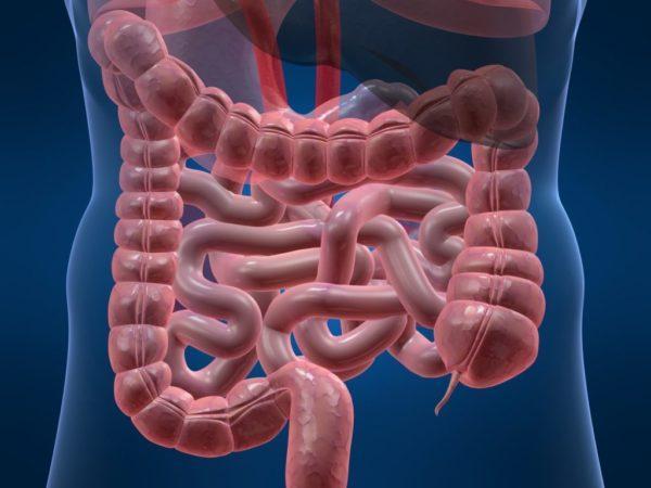 Внешний вид толстого  кишечника