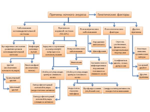 Возможные причины энуреза