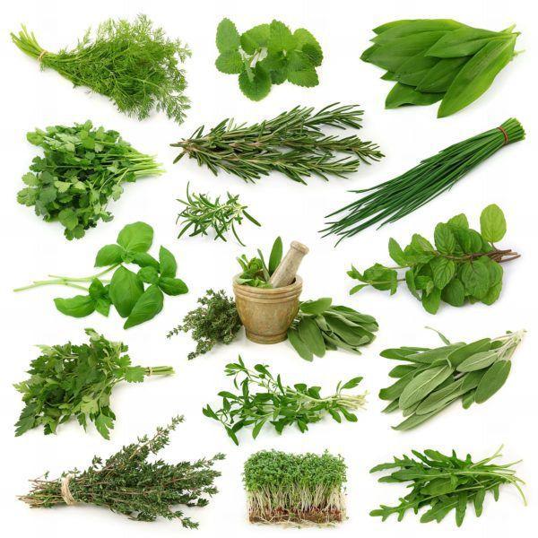 Зелень — это первый и главный источник витаминов и минеральных веществ, включая протеины