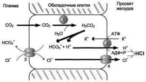 Пепсиноген 1