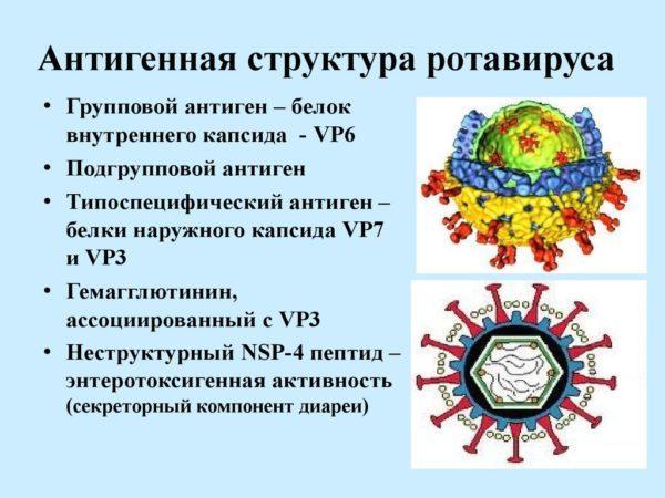 Антигенная структура ротавируса