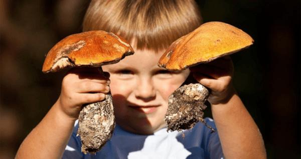 До 5-6 лет грибы детям лучше не давать