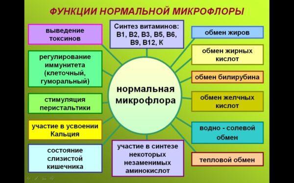 Функции микрофлоры кишечника