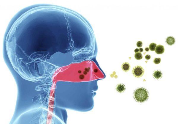 Инфекции носоглотки: ОРВИ, риновирусная инфекция и другие