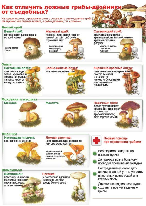 Как отличить ложные грибы-двойники от съедобных