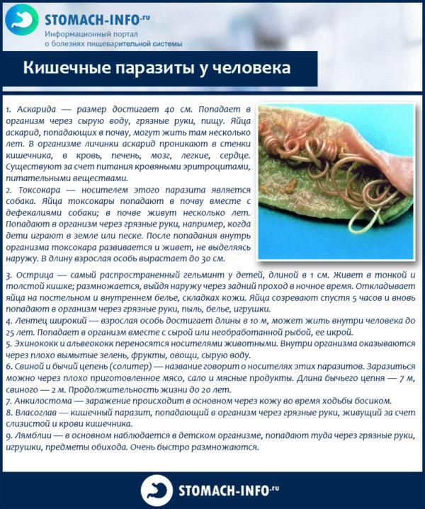 кишечные паразиты у человека лечение народными средствами