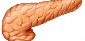 Можно ли жить без поджелудочной железы