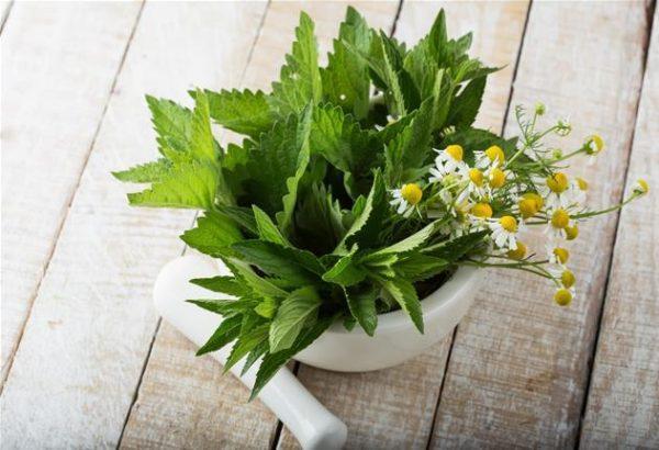 Настой ромашки и мяты помогает вывести токсины при отравлениях