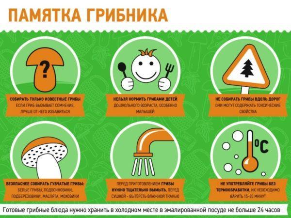 Через сколько проявляется отравление грибами
