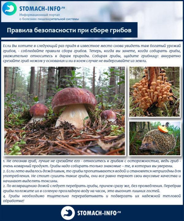 Правила безопасности при сборе грибов
