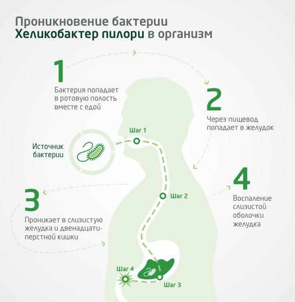 Проникновение Хеликобактер Пилори в организм