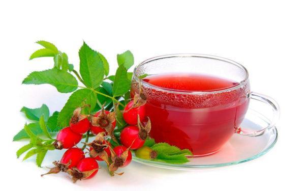 Шиповник содержит большое количество пребиотических волокон и аскорбиновой кислоты