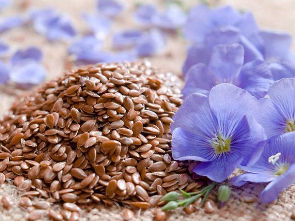 Семена льна устраняют атонии кишечника, помогают устранить боль, которая возникает из-за спазма пищеварительной системы