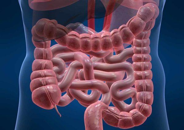 Симптомы воспаления кишечника у взрослых