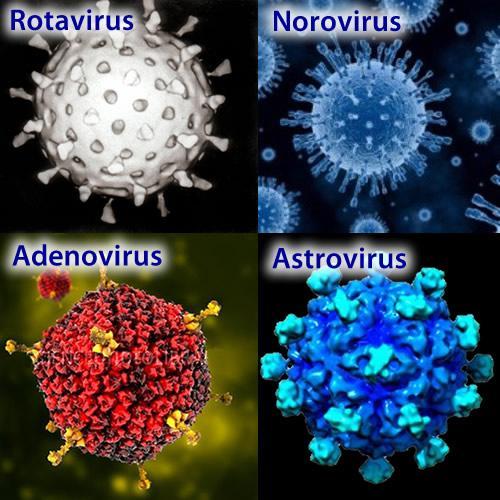 Виды вирусов