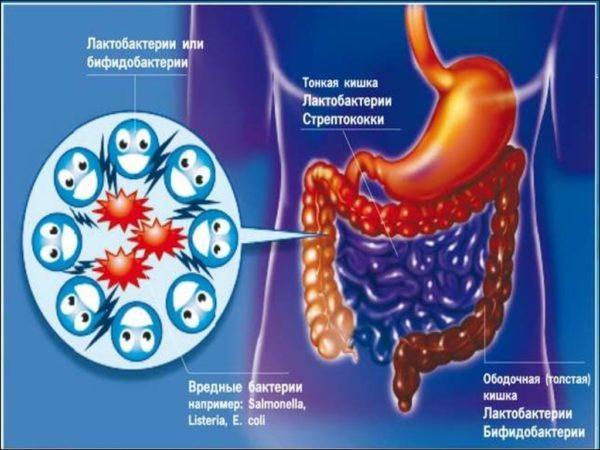 Патогенная микрофлора в кишечнике может вызвать урчание в абдоминальной области