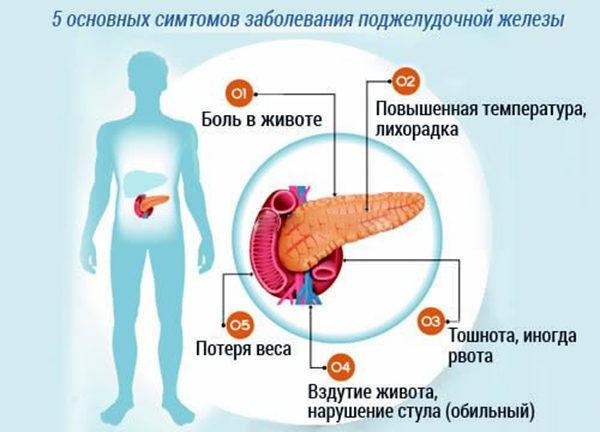 5 сигналов организма о сбое в работе поджелудочной железы