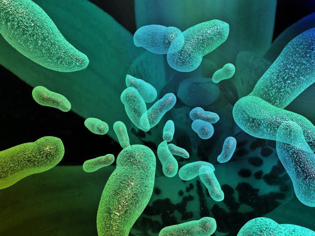 В первые недели жизни грудничка происходит активное формирование микрофлоры кишечника