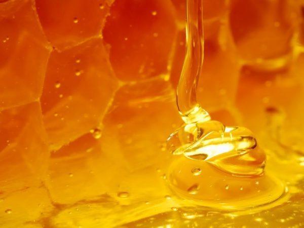 Для лечения ЖКТ лучше выбирать мёд высокосортный, свежий