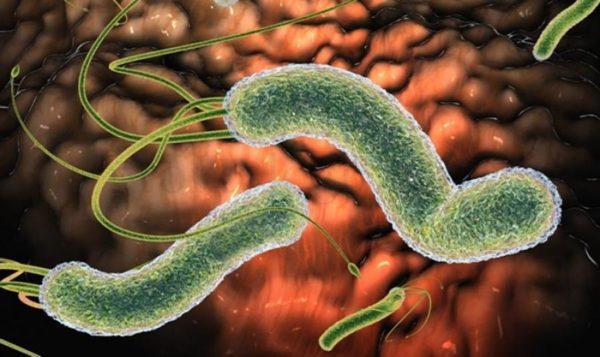 Энтероколит – это заболевание отделов кишечника, носящее воспалительный характер, которое затрагивает в основном тонкий и толстый кишечник