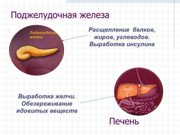 Функции печени и поджелудочной железы