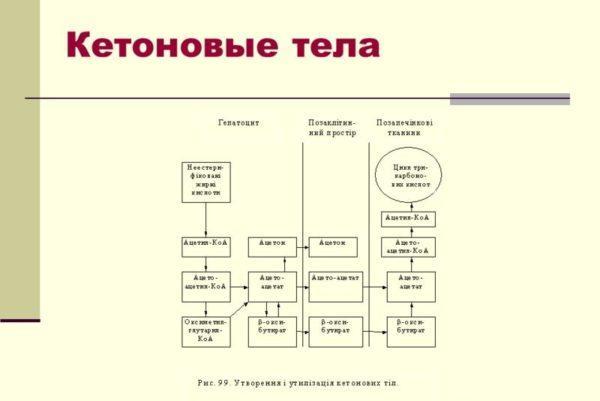 Кетоновые тела